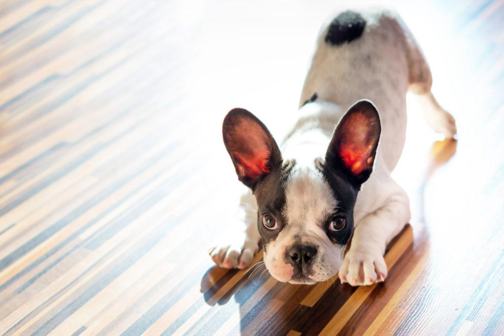 dog training nyc