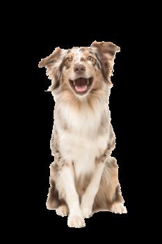 high energy dogs