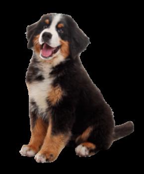 nyc dog trainer